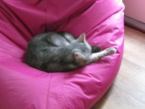 Katten å Glufs 005