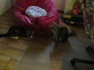 Katten å Glufs 003